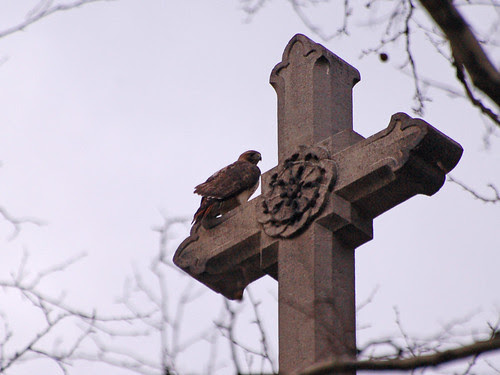 Red-Tail atop Saint Savior Chapel