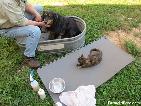 Bear about to get a bath - FarmgirlFare.com