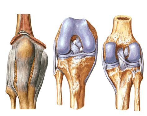 articulacao  joelho purposegames