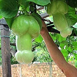 80% Off Coupon Code For Pumpkin Vegetables