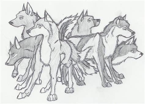 wolf pack drawings  pencil