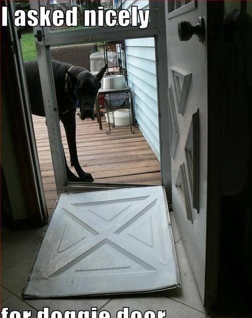 Dog Door For Great Dane Here Is Dog Training Method