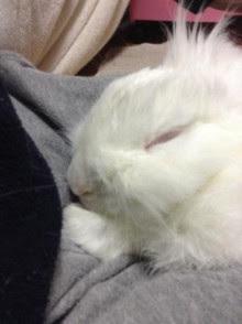 うさちゃん寝顔
