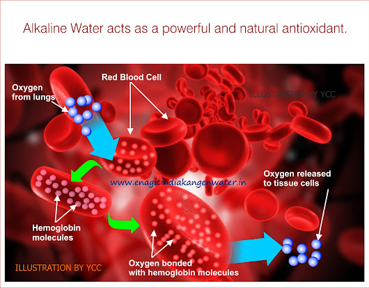 Alkaline Water Ionizer Enagic India Kangen Water - Enagic India Kangen Water - Alkaline Ionized Water Ionizer