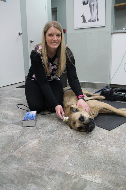 CanineTech Laser Therapy for Dogs