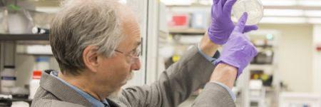 El científico Jef Boeke muestra la primera levadura con un cromosoma...