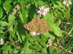 03 butterfly