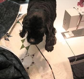 sewing dog