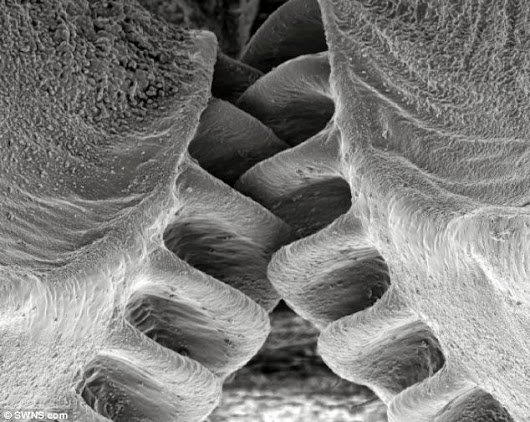'Mechanical gears' discovered for first time on plant hopping insect