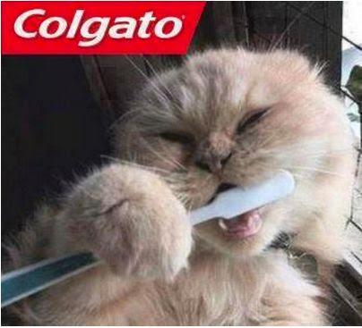 Imagenes De Amor Con Gatos Y Frases Lamaran R
