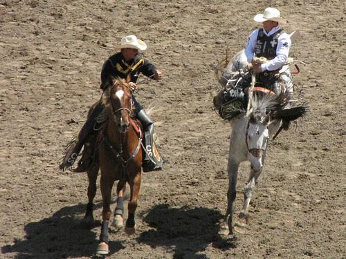 Saddle bronc 3
