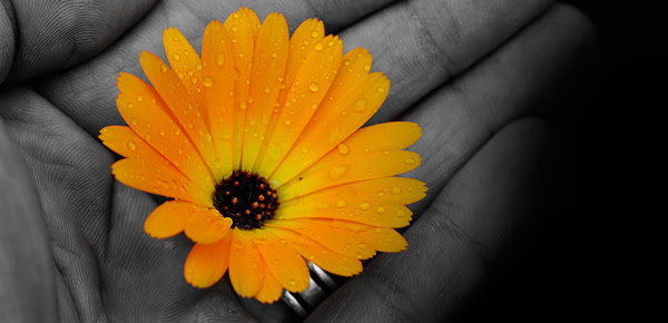 life-changing-gratitude