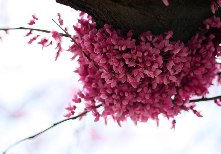 Springtime flowers in STL