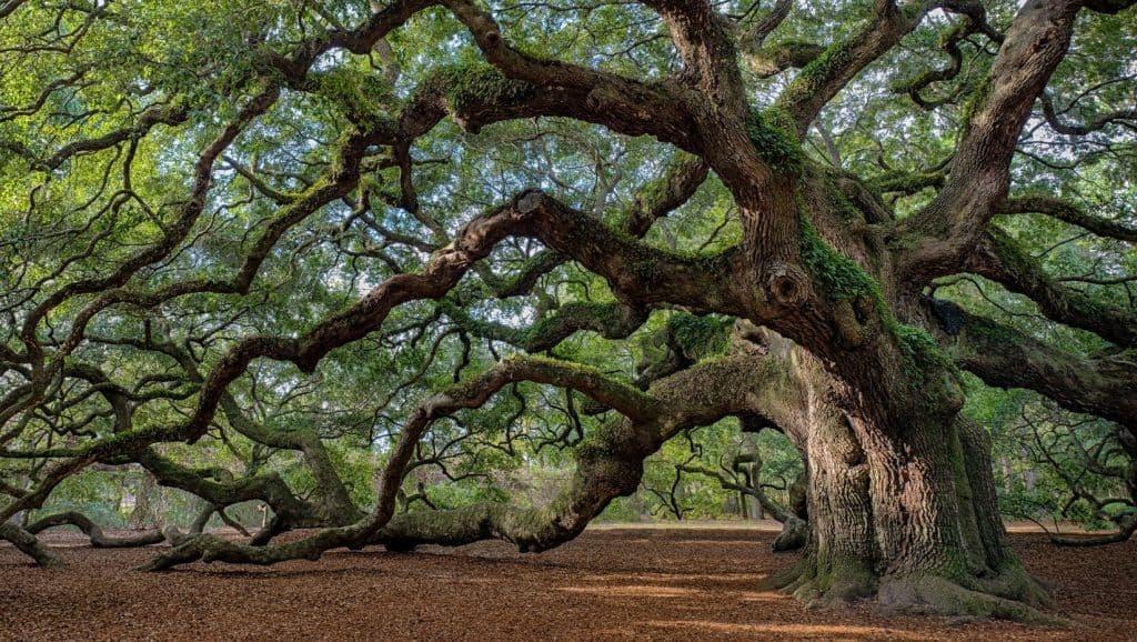 Fuerte Como Un árbol Postura Yoga