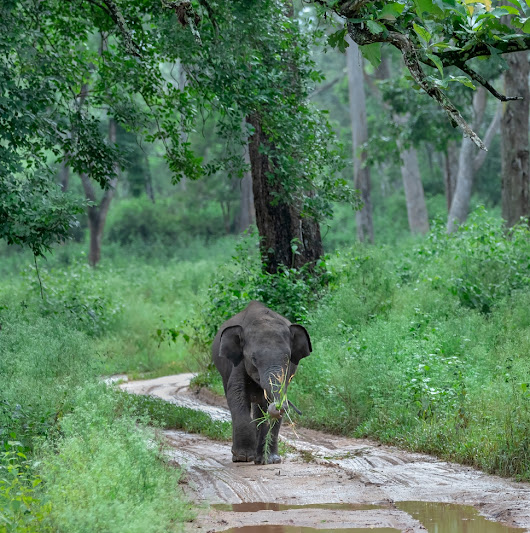 India | Baby Elephant with Some Vegetables