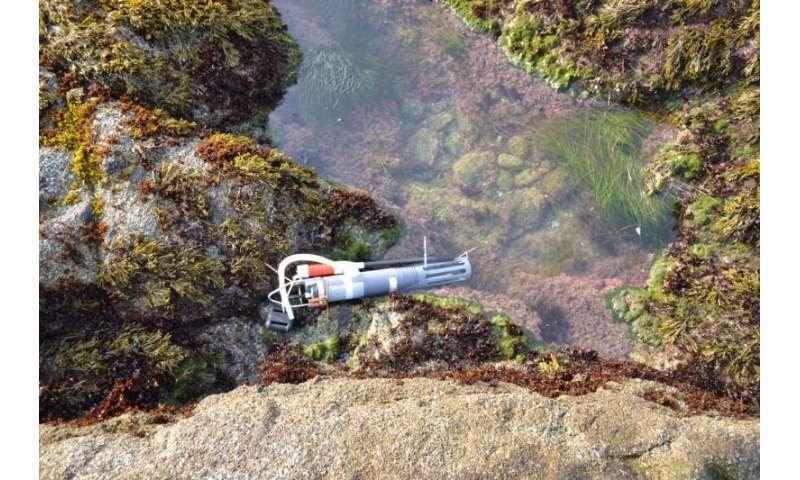 Ocean acidification takes a toll on California's coastline at nighttime