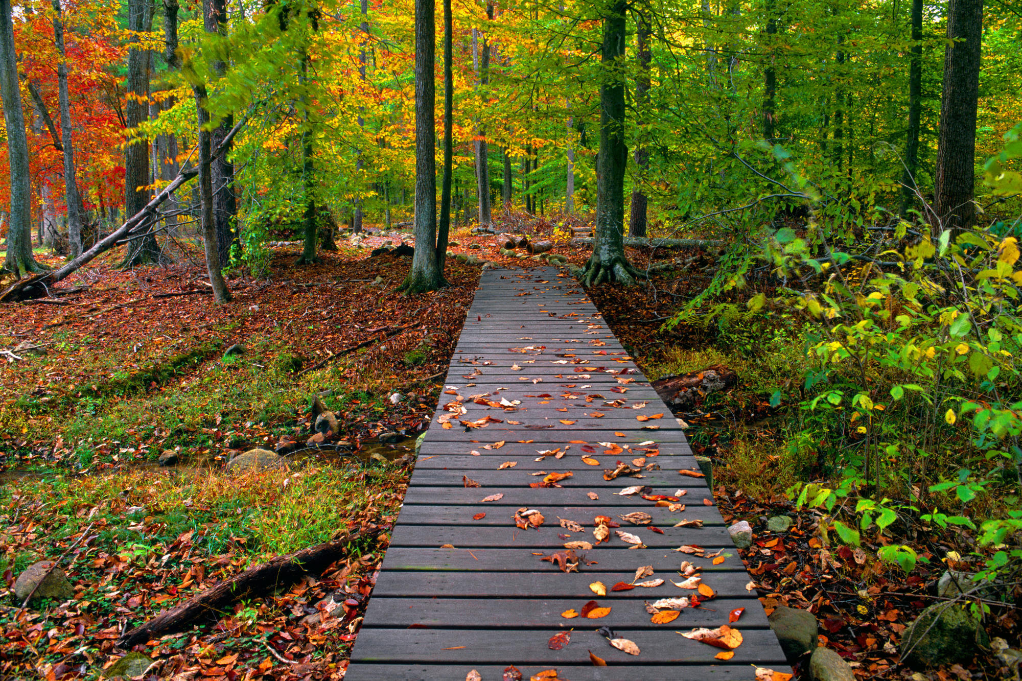 fall  nature  backgrounds  21319 hd  wallpapers  MAPS