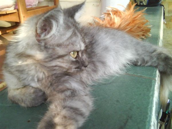 Nama Kucing Warna Abu Abu 81021 Nama Untuk Kucing Comel Lucu Dan Unik
