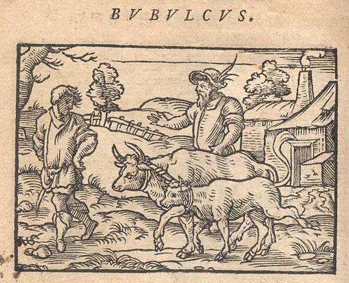 Bos et Vitulus, Iuncti - Osius