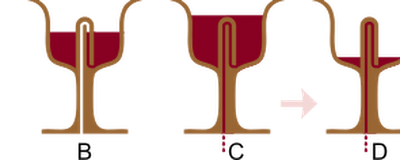 Pythagorean cup - Wikipedia, the free encyclopedia