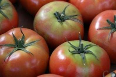 Mengendalikan Bahu Kuning Pada Tomat Informasi Tentang Tomat Green