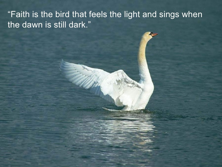 Birds Quotes Pictures And Birds Quotes Images With Message
