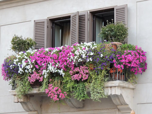 BEST TIPS FOR A BALCONY GARDEN: CONTAINER TIPS
