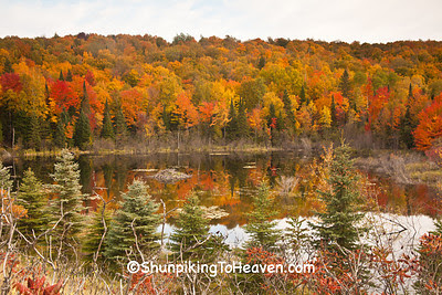 Fall Color Reflection, Forest County, Wisconsin