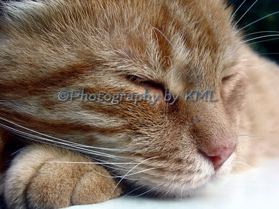 sleeping cat is most popular image
