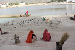 Pushkar Peace by firoze shakir photographerno1