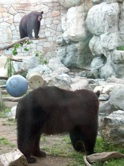 Bears_61811f