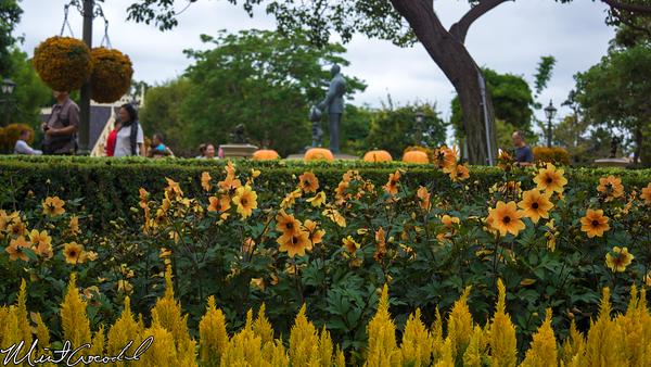 Disneyland Resort, Disneyland, Hub, Flowers