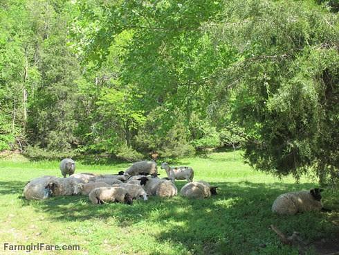 (27-3) Chilling out in the shade - FarmgirlFare.com