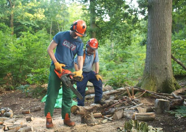 DSC_6976 chainsawing logs
