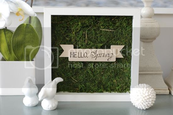 photo moss-shadow-box-tutorial-2_zps72946e8c.jpg