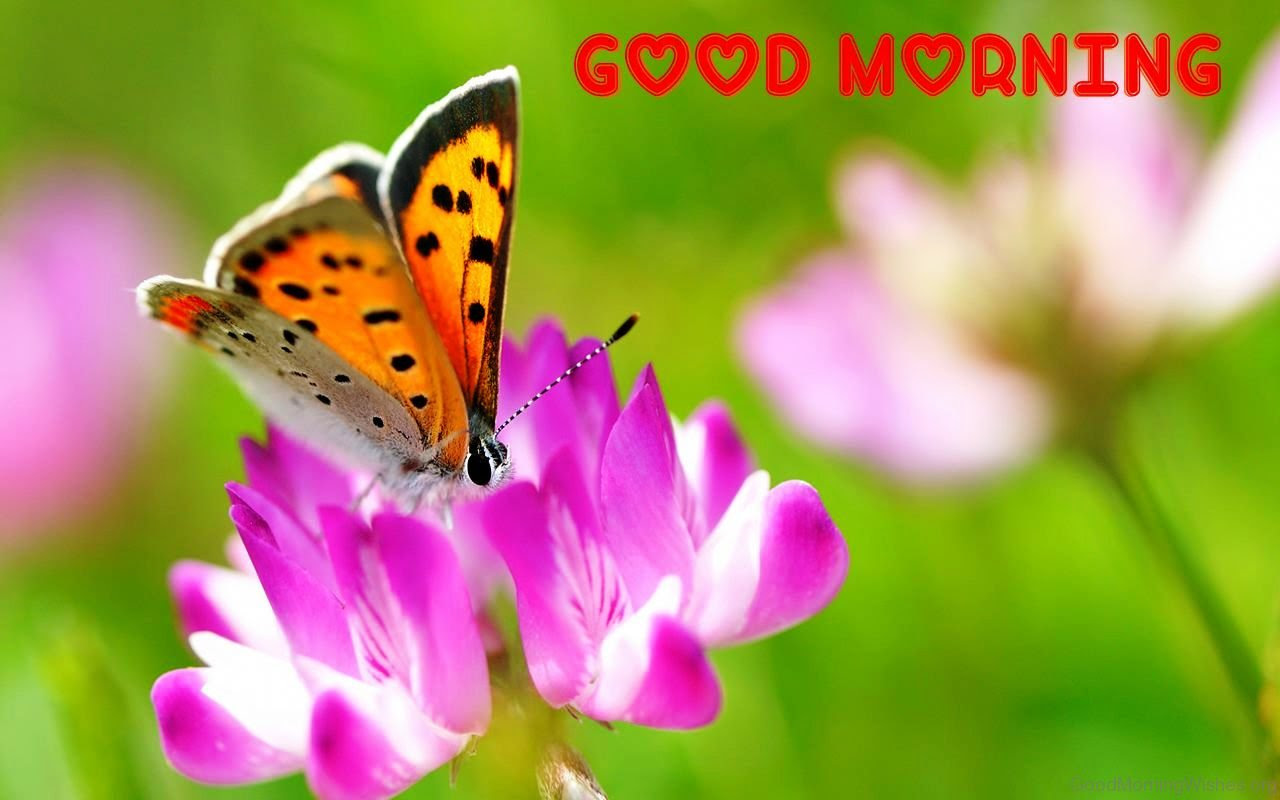 28 Good Morning With Butterfly Quotes Good Morning
