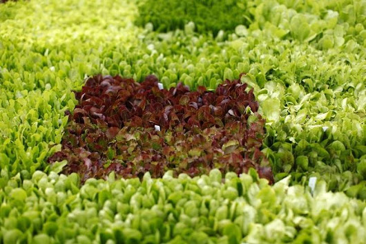 Eating green leafy vegetables may lower glaucoma risk