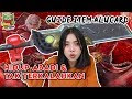 Guide Alucard Terbaru