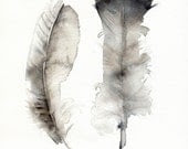 Turkey Feathers- archival print, feather art, feather watercolor - amberalexander