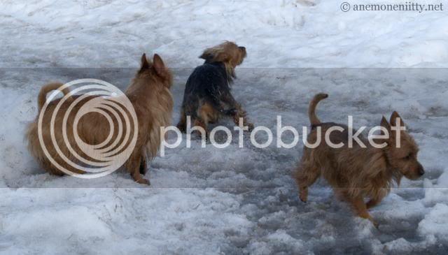 X-files: Tessa, Ruska, Lilja photo 101_5175.jpg
