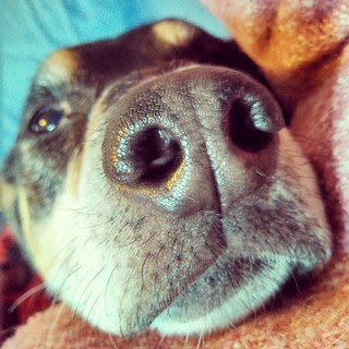 I don't think he can get any closer... #dogstagram #Rescued #coonhoundmix #sniffer #snuggles #overlycuddly #ilovemydogs #adoptdontshop #instadog
