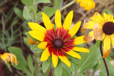 Pane_Bianco0005_Flower
