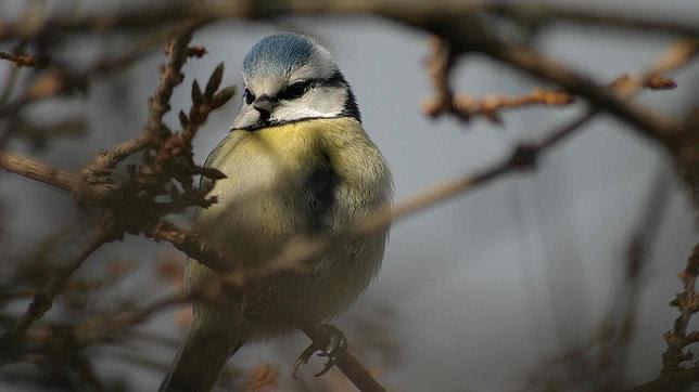 Los pájaros pueden sentir emociones con el canto como los humanos con la música