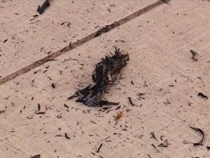 Fuligem é resultado da queima da cana-de-açucar no Vale do São Francisco (Foto: Reprodução/ TV Grande Rio)