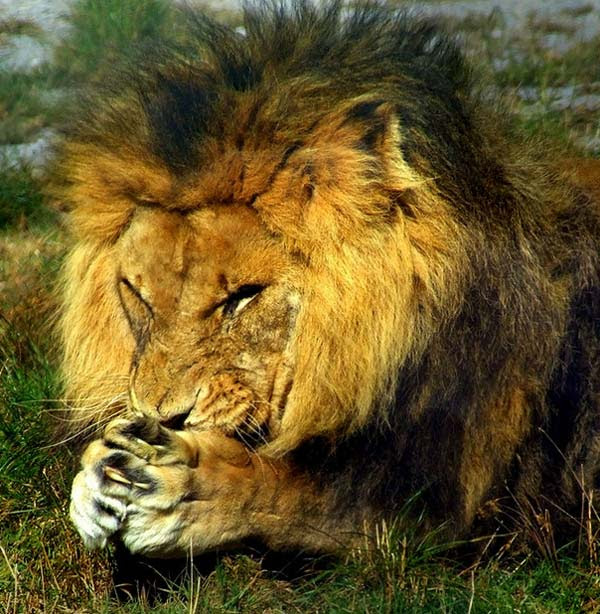 perierga.gr - Ησυχία! Τα ζώα... προσεύχονται!