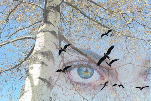 The Miracle Of Your Body. In Quest Of Health And Harmony | Autumn Blue Eyes