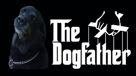 The Dogfather UK - South West London Dog Walkers and Dog Boarding