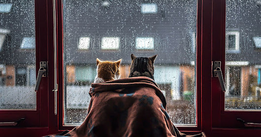 I Photograph My Cats In Front of the Window Whenever It Rains