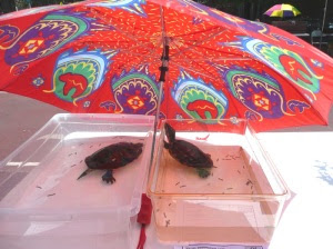 Water turtles enjoy some shade.