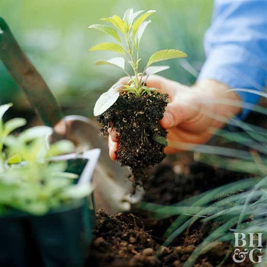 Step 6: Get Planting